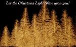 brilliant-display-of-tree-lights-232832